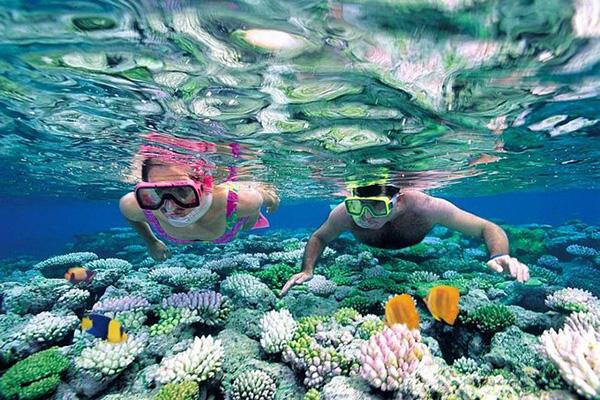 Lặn ngắm san hô tại đảo hòn Mun