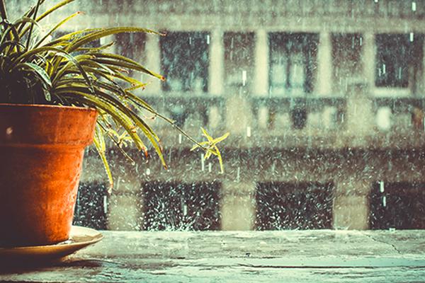 Sài Gòn và những cơn mưa bất chợt